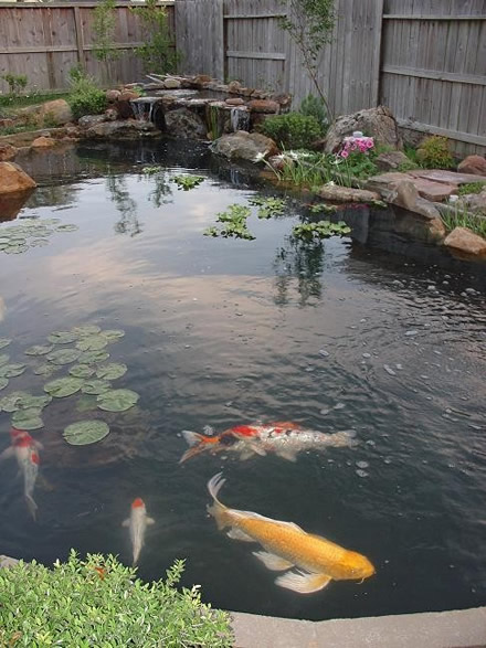 Lone star koi club for Simple koi pond